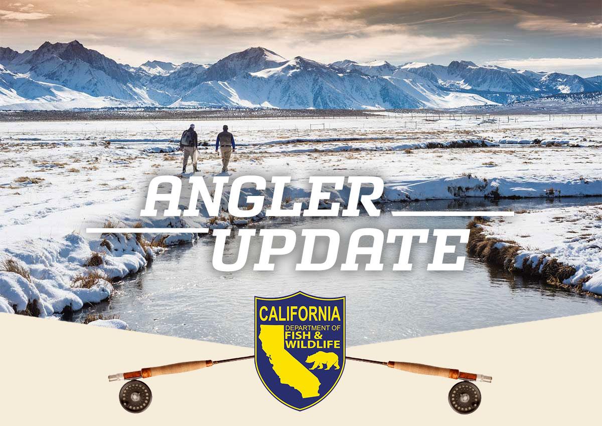 Angler Update