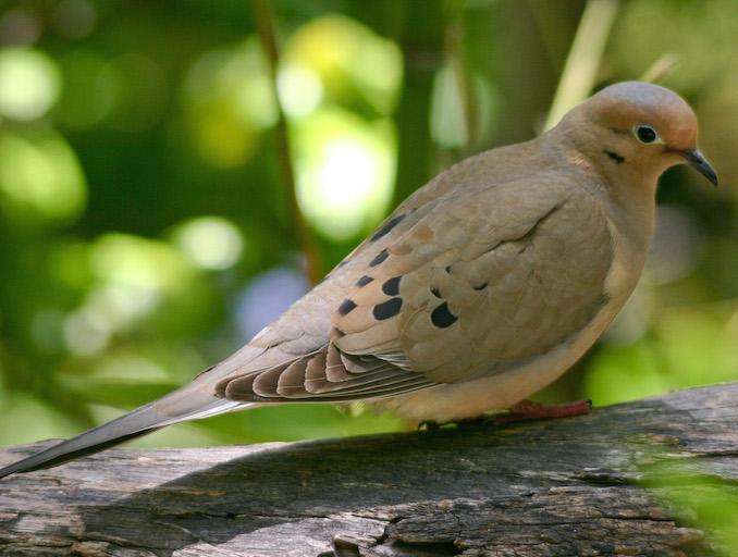 Dove Opener